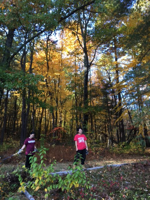 Conservation+Corps+clearing+invasives.